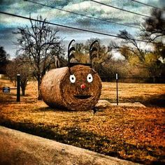 Rudolph the red-nosed hay bale! Richardson, Texas