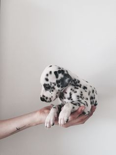 The 5 Dog Breeds with the cutest Puppies! But hey - aren't all puppies the cutest? Animals And Pets, Baby Animals, Cute Animals, Cute Puppies, Dogs And Puppies, Doggies, Dalmatian Puppies, Small Puppies, Puppy Goldendoodle
