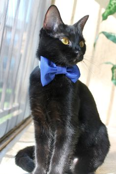 Wedding Blue Kitten Collar Accessory by gatinela on Etsy, $13.00