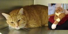 "A shelter cat was so sad that he kept himself in the corner of his cage all day, but a woman took a chance on him and changed his life forever.Courtesy: TeganA ginger tom cat had been hanging around a neighborhood for quite some time. ""One day (he) parked himself on someone's front porch and stayed ..."