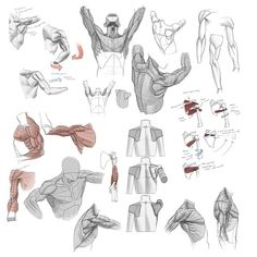 An okay fuck-ton of simple shoulder movement references. [From various sources]