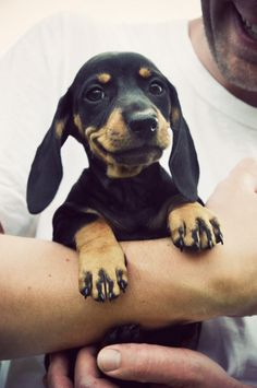 little baby dachsund - that smile! :)