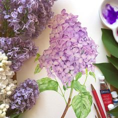 Lilac watercolor illustration on Behance