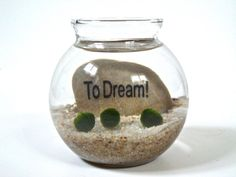 Marimo Moss Ball Underwater Zen Terrarium with Inspirational Word Stone, Housewarming Gift, Inspiration Gift, Inspiration Decor, Stone Decor...
