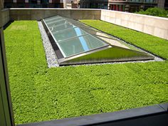 If we have a green roof, would like short, cropped plants, not an overgrown jungle!                                                                                                                                                      More