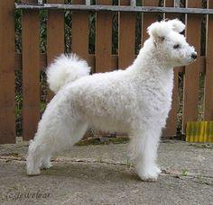 21 Awesome Dog Breeds You