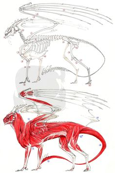 European Dragon Anatomy by Pythosblaze.deviantart.com