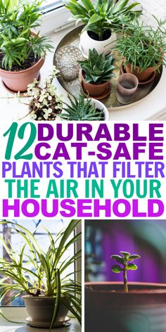 These non toxic houseplants make amazing home decor as they are safe for pets. Add some greenery to your home while enjoying a nice air detox. Houseplants Safe For Cats, Cat Safe Plants, House Plants Decor, Plant Decor, Amazing Gardens, Beautiful Gardens, Common House Plants, Air Cleaning Plants, White Flower Farm