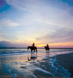 Amelia Island State Park is one of the few places you can ride horses on the beach in Florida. (Click for details)