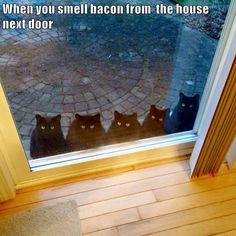 When you smell bacon from the house next door http://cheezburger.com/9036173568/bacon-cats