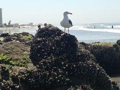 Seagull having too much fun!!
