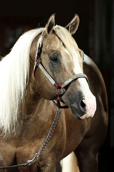 Wimpys Little Step, one of my dream horses