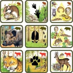 Pexetrio Plus: Savci Preschool Library, Mushroom Crafts, File Folder Activities, Montessori Practical Life, Forest Theme, Animal Habitats, Fauna, Science And Nature, Animals For Kids