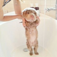 48+Best+Images+Cute+Puppy+|+Best+Pictures