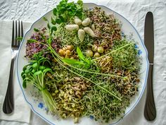 Sprouts The Living Super Food - Hippocrates Health Institute Nutrition Action, Nutrition Tips, Superfoods, Growing Sprouts, Broccoli Sprouts, Bean Sprouts, Vegetarian Recipes, Healthy Recipes, Gardens