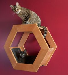 Wall-mounted shelving units for cats
