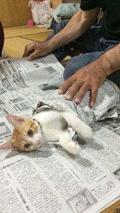 ウチのおじいちゃんは新聞の邪魔をするといつもこうするw