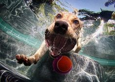 "Photography series, ""Underwater Dogs"". Awesome!     More pictures here: http://www.spiegeloffline.de/2012/02/12/underwater-dogs-von-seth-casteel/"