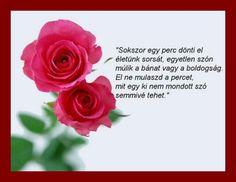 """Képtalálat a következőre: """"buddha egyszer azt mondta a szeretetröl rózsa"""" Plants, Google, Buddha, Plant, Planets"""