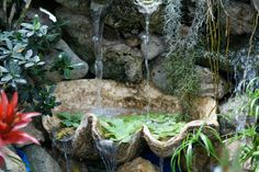Waterfall with water cascade made of giant clam shells.