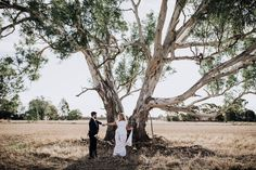 Brown Brothers Winery Photo Gallery   Easy Weddings Wedding Coordinator, Wedding Events, Our Wedding, Destination Wedding, Wedding Photo Gallery, Wedding Photos, Simple Weddings, Real Weddings, Show Photos