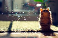 Observing bubbles