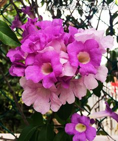 Jardineria on pinterest cottage gardens climbing roses - Plantas para vallas ...