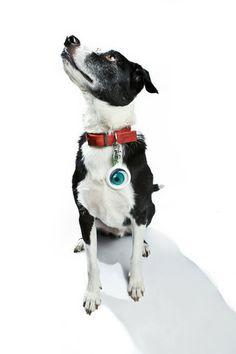 Hi-di-hi - Winky Clicker Keyring Fun Conversation Starters, Boston Terrier, Cool Stuff, Dogs, Animals, Cool Things, Animais, Animales, Animaux
