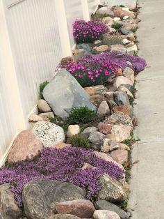 rock garden and creeping flowering thyme .... so pretty! -Garden Landscaping Ideas- #rocklandscape