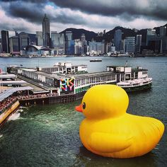#rubberduck Instagram photos | Webstagram - the best Instagram viewer