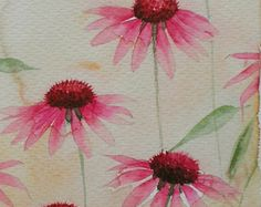 ART Watercolour painting of ECHINACEA original art by Amanda Hawkins 14 x 22cm decorative floral country cottage garden flowers herbal