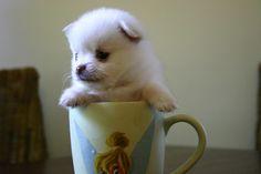 My pup in my fav mug