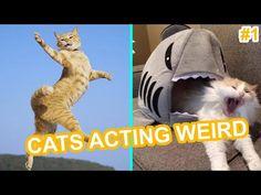 O GRITO DO BICHO 3: Alô, gateiras e gateiros!!!!! Divirtam-se Funny Cat Videos, Funny Cats, Vida Animal, Pet Corner, Try Not To Laugh, Cat Gif, Cute Baby Animals, Cat Memes, Cute Babies