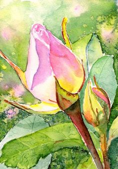 Rose Buds In The Garden Art Print by Carlin Blahnik CarlinArtWatercolor. All prints are professionally printed packaged and shipped within 3 - 4 business days. Choose from multiple sizes and hundreds of frame and mat options. Art Paintings, Watercolor Paintings, Plant Drawing, Botanical Wall Art, Rose Art, Watercolor Rose, Flower Art, Bud Flower, Rose Flowers