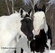 Unusual horse markings, polar opposites.