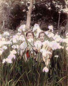 Two women in an iris garden, ca. 1880-1898 attr. to Tamamura Kihei and Tamamura Kozaburo