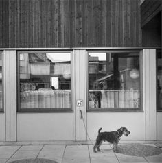 Photo by Gunnar Smoliansky, 1976 One Pic, Street Photography, Black And White, Photographers, Image, Dogs, Life, Inspiration, Collection