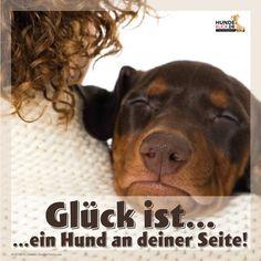 Glück ist ein Hund an deiner Seite!