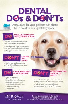 Being diligent about dental care can save you and your pet lots of problems down the road! For more helpful pet tips, click here- http://www.embracepetinsurance.com/Health/default.aspx
