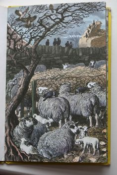 C.F. Tunnicliffe sheep painting