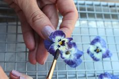 Simple is such an over used word, but really, when something takes no skill, hardly any time and has amazing results, I struggle to find a better fitting word.  Candied pansies, or any edible flower,