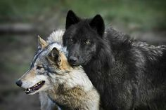 the-smiling-wolf