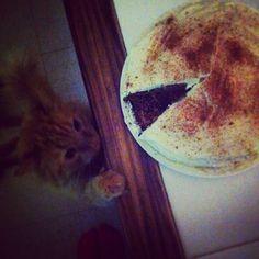 Léo et son Gâteau au Carrottes