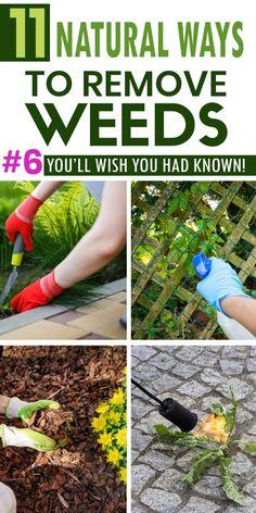 Garden Yard Ideas, Lawn And Garden, Garden Projects, Garden Landscaping, Garden Weeds, Garden Plants, Container Gardening, Gardening Tips, Kill Weeds Naturally