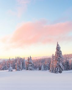 "The soft colors of sunset reflect off the snow, creating this breathtakingly beautiful shot from Crater Lake National Park in Oregon. Christian Schaffer snapped this pic a few months ago when the park's snowpack was over 8 feet high. Of the experience, she says, ""It was so incredibly beautiful and also incredibly cold – all of our electronics died while we were out there except my one camera battery. The cold was worth it though; one of the most amazing sunsets I've ever seen."" Photo…"