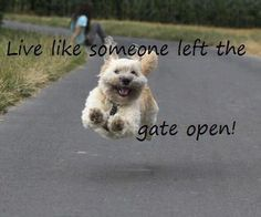 live like someone left the gate open - Google Search