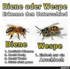 Biene oder Wespe..