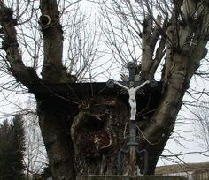 Křížek a stromy - Rožany u Šluknova - Česko