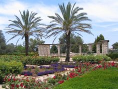 pics of rose garden in israel - Google Search