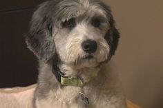 'He's definitely bringing more smiles': Funeral home welcomes canine companion (Kent Morrison, Global News)